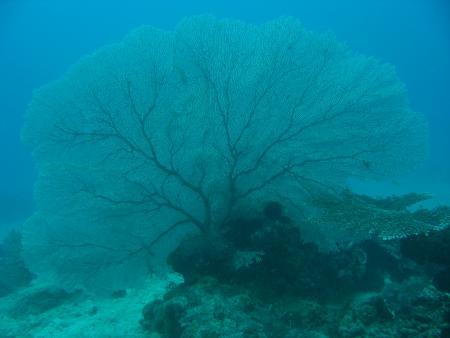 Sipaway Divers,Philippinen