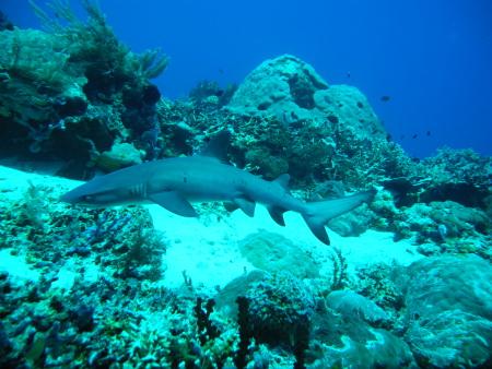 Orca Dive Club Labuan Bajo Flores,Allgemein,Indonesien