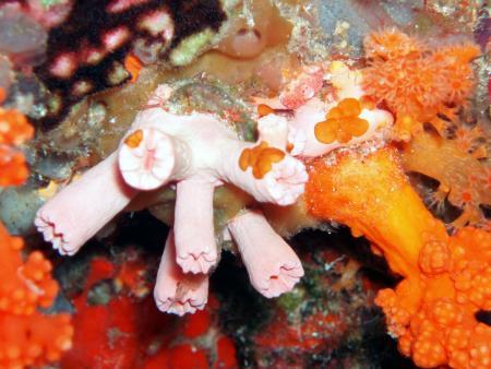Wakatobi Dive Resort,Sulawesi,Indonesien