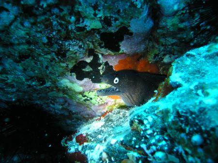 Coral-Sub,Las Galletas,Teneriffa,Kanarische Inseln,Spanien