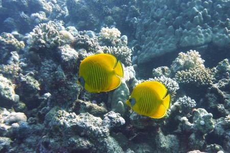 SUBEX,Radisson Resort,El Quseir,El Quseir bis Port Ghalib,Ägypten