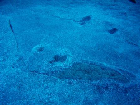 Kanarische Inseln / Teneriffa,Spanien