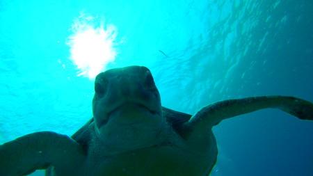 Ocean Trek,Playa Americas,Teneriffa,Kanarische Inseln,Spanien