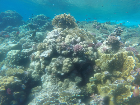 Orca Dive Club Moreen Beach,Marsa Alam und südlich,Ägypten