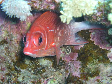 1-2-3 Dive Kapitain,Hurghada,Ägypten