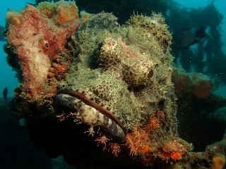 neues von Scary Crab, Dili / Scary Crab,Osttimor