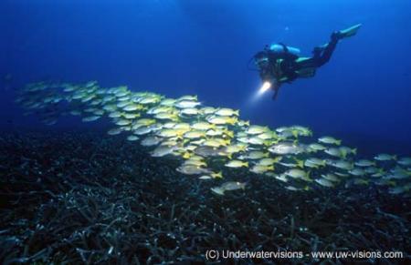 Lissenung Island Resort,Lissenung Island Resort / Kavieng (New Ireland),Papua-Neuguinea