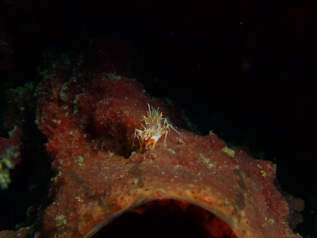 Critters@Lembeh - Lembeh Resort,North Sulawesi,Sulawesi,Indonesien