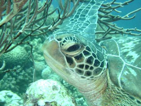 Layang Layang Dive Center,Pulau Layang Layang,Malaysia