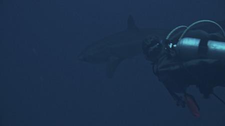 M/Y Seawolf Dominator,Ägypten