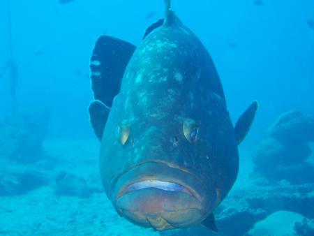 Club Aldiana,Oceanworld (ex Toni Mayer),Kanarische Inseln,Spanien