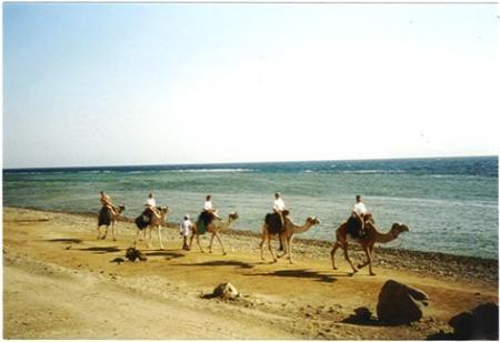Hard Rock Dive Center,Dahab,Sinai-Nord ab Dahab,Ägypten