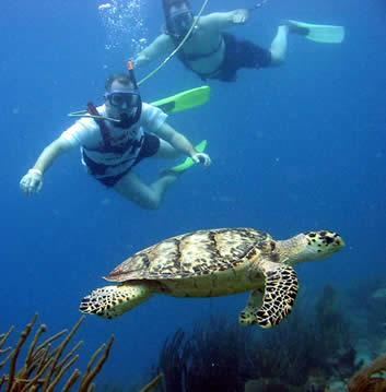Aquatica Dive & Surf,Aguadilla,Puerto Rico