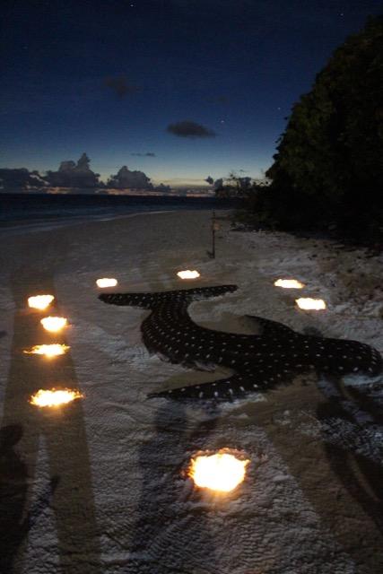 """""""Walhai"""" beim Inselbarbecue, Carpe Novo Explorer, Malediven"""