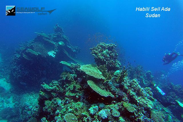 Tauchplatz, Seawolf Diving Safari Sudan Süden Dominator, Habili Seil Ada, Sudan