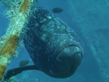 Lucky Divers,Agia Napa,Zypern