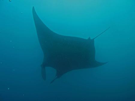 Guanacaste,Bat Islands,Big Scare/Black Rock,Costa Rica