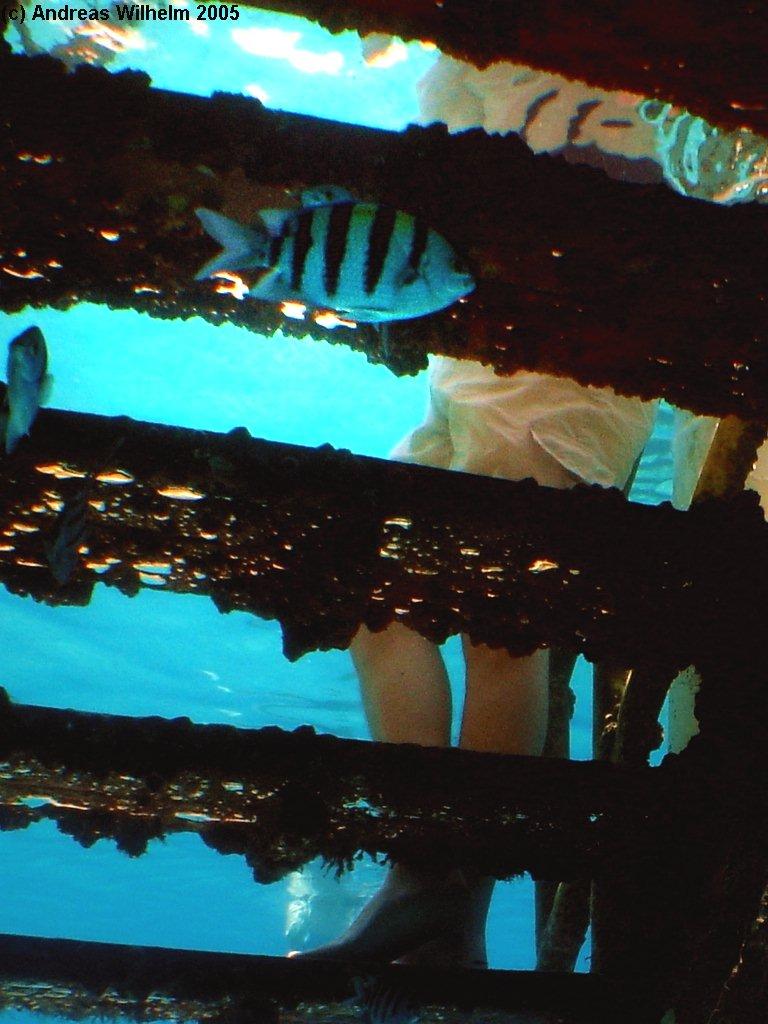 Eilat - Neptun Tables, Eilat - Neptun Tables,Israel