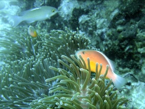 Phi Phi Insel - Bida Mai, Phi Phi Islands,Thailand