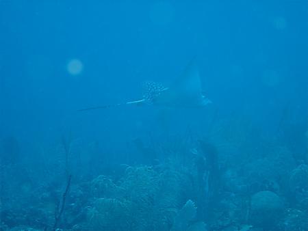 Sea Pro Divers,Boca Chica,Dominikanische Republik
