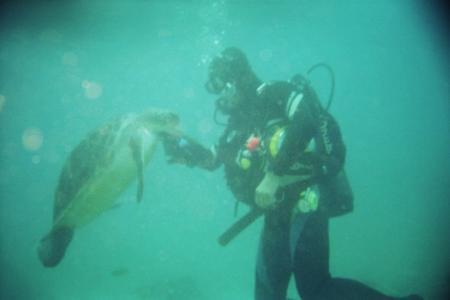 Descubare-Atlantico,El Medano,Teneriffa,Kanarische Inseln / Teneriffa,Kanarische Inseln,Spanien