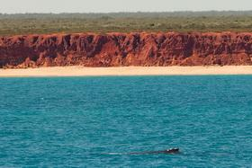 Wale for der Küste am James-Price Point, Broome © Sea Shepherd