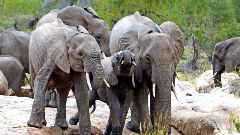 Elefanten, Simbavati Hilltop Lodge, Beluga Reisen, Göttingen, Deutschland, Niedersachsen
