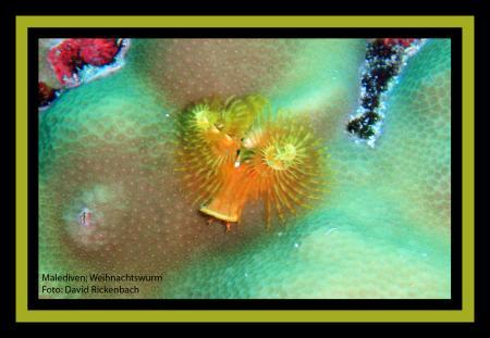 Helengeli,Ocean Pro,Malediven