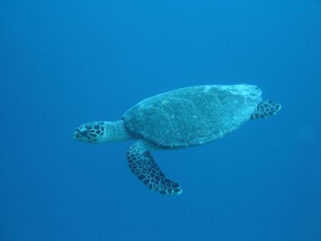 Meemu Atoll,Malediven
