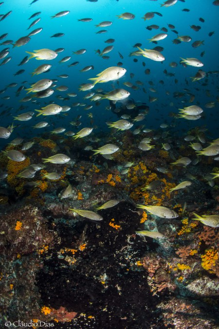 Dive-Tribe,Sao Vicente,Mindelo,Kap Verde