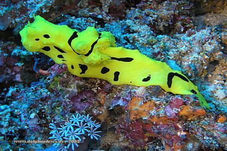 Thalassa,Manado,Nord-Sulawesi,Sulawesi,Indonesien