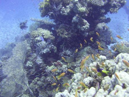 Panorama Divers,Hurghada,Ägypten
