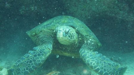 Seasport Divers,Poipu,Kauai,Hawaii,USA