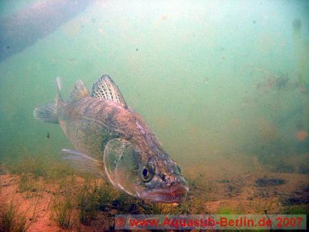Aquasub-Berlin,Tauchbasis am Bergwitzsee,Sachsen-Anhalt,Deutschland,Sachsen Anhalt