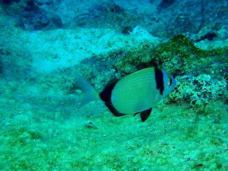Likya Diving,Kas,Türkei