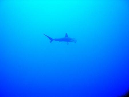 M/Y Dive One,Ägypten