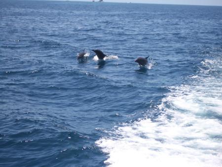 Costa Rica Diving,Playa Flamingo,Costa Rica