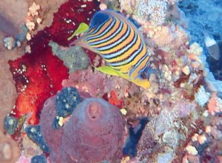 Jackson Reef (Straße von Tiran),Ägypten