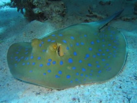 Orca Dive Club,Turtle`s Inn Dive Club,El Gouna,C Fun Divers,Iberotel Palace,Sharm el Sheikh,Hurghada,Sinai-Süd bis Nabq,Ägypten