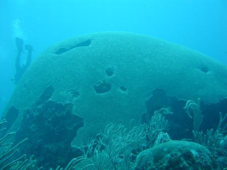 Manta Dive Tobago,Trinidad und Tobago