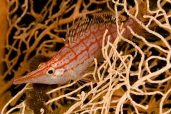 Extra Divers El Quseir,Mövenpick Resort,Extra Divers,Sharm el Arab,El Quseir bis Port Ghalib,Hurghada,Ägypten