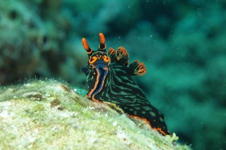 Dive Spot Asia,Dalaguete,Cebu,Philippinen