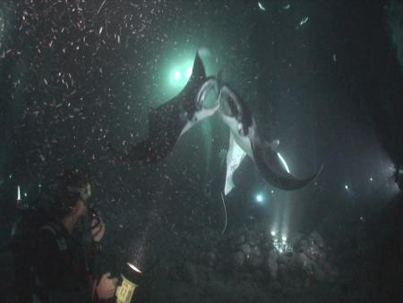 Jack´s Diving Locker,Kona,Big Island,Hawaii,USA
