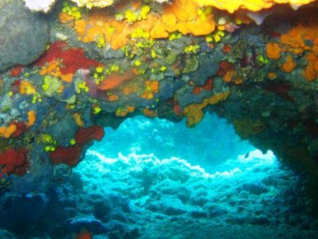 Teos Divers,Sigacik,Türkei