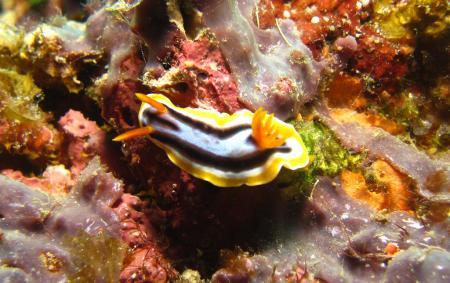 Agnay Marine Sanctuary,Romblon Island,Philippinen