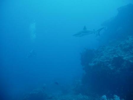 wirodive,Malediven
