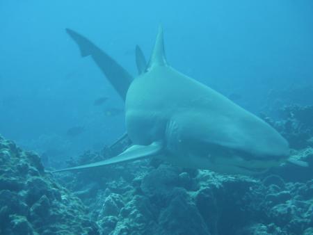 Fun Dive,Moorea,BoraBora,Rangiroa,Fakarava,Französisch-Polynesien