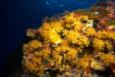 Mar Balear Dive Center,Mallorca,Balearen,Spanien