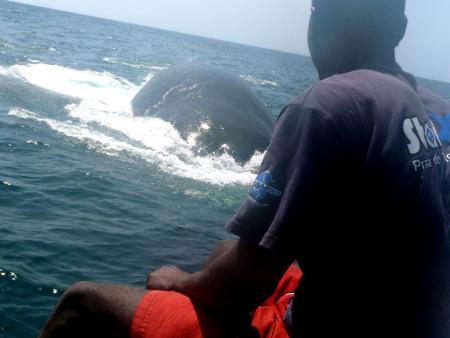 Tofo,Mosambik