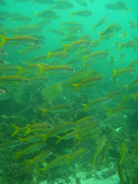 Extra Divers Mirbat,Oman